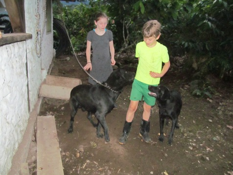 With the farm dogs, Cambi and Zeus