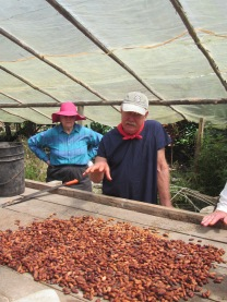 Drying cacao seeds in a greenhouse -- this is where chocolate comes from